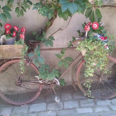 Bicycle Garden